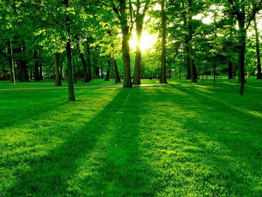 Un paseo por el parque beneficia la salud
