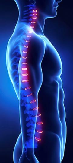 Terapia Craneosacral y alineación de la columna